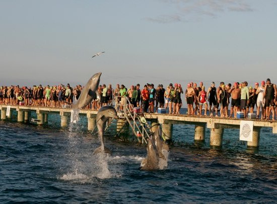 Ford Ironman Cozumel dolphins