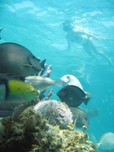 Marinarium tour in the Dominican Caribbean