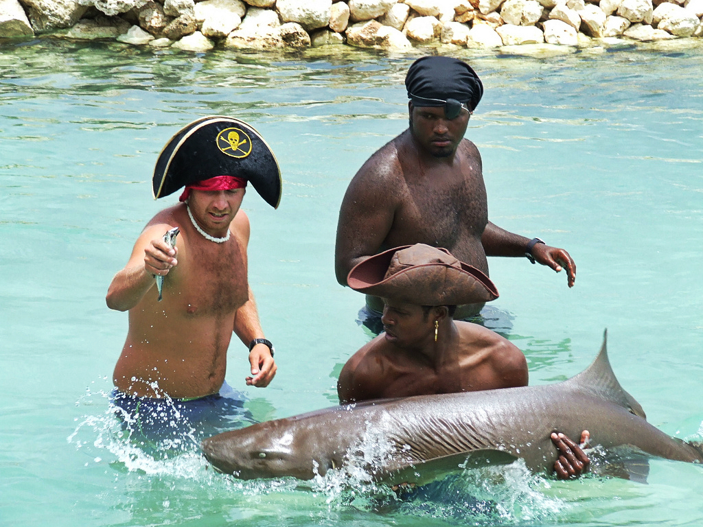 Dolphin Cove pirate show