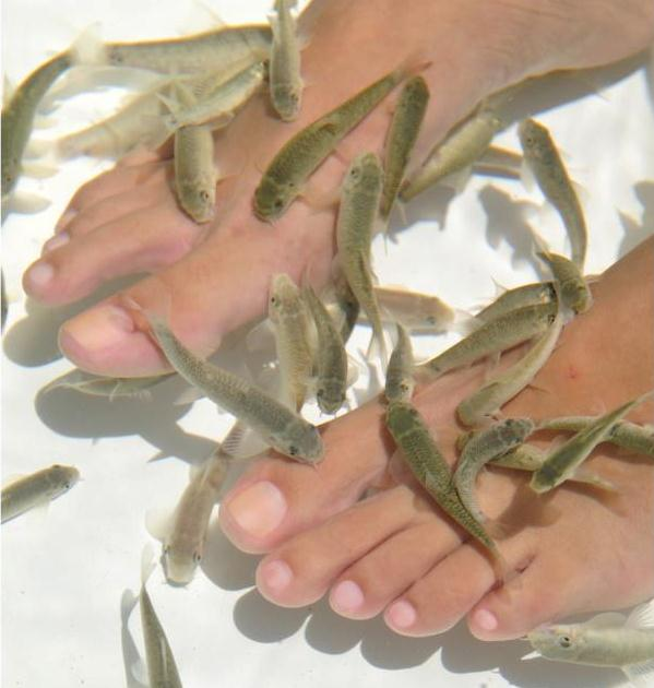 Doctor fish spa treatment