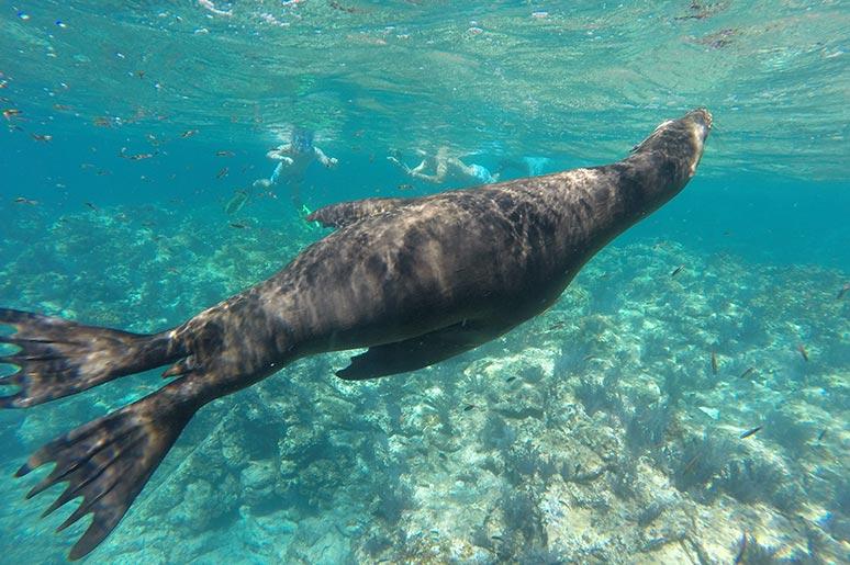 espiritu santo island sea lions