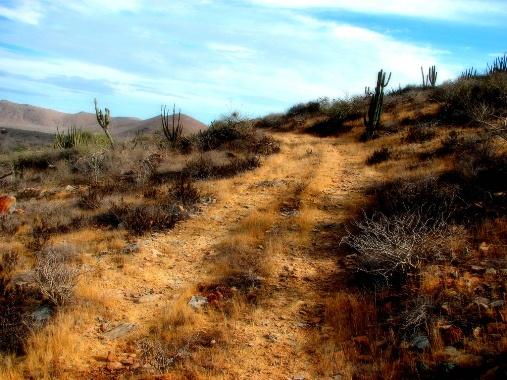 Desert Roads, Baja California
