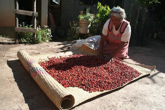 Coffee drying, Oaxaca