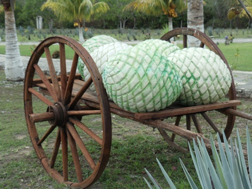 A wooden cart used to haul the piñas or hearts of the agave, whose sap or nectar is fermented to produce tequila