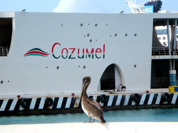 A pelican sits on the dock in front of the ferry landing on Cozumel Island