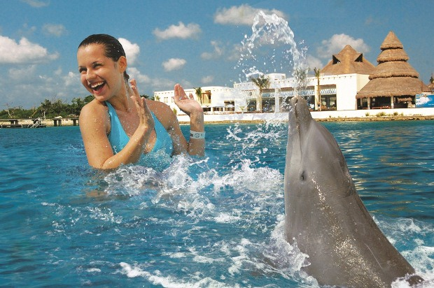 things to do in Cancun - Dolphin tours