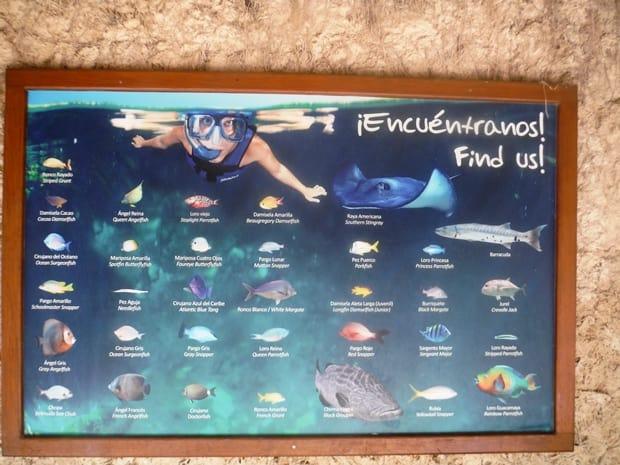 xel ha fish finder
