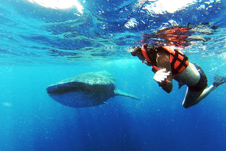 swim with whale sharks cancun tour