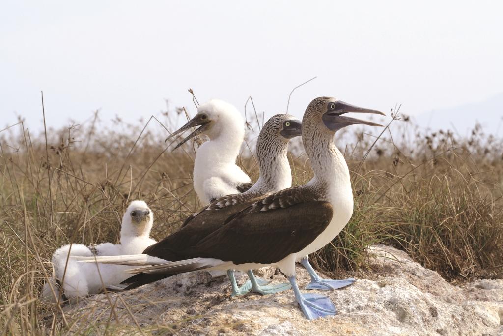 Marietas Islands birds
