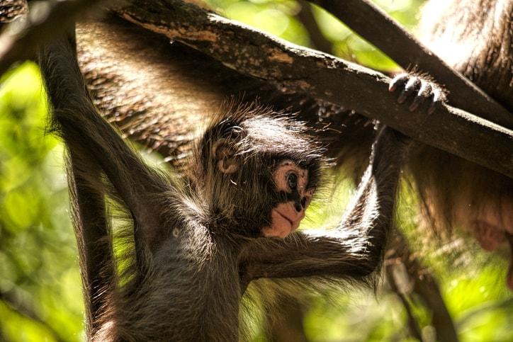 family spring break Monkeyland Punta Cana
