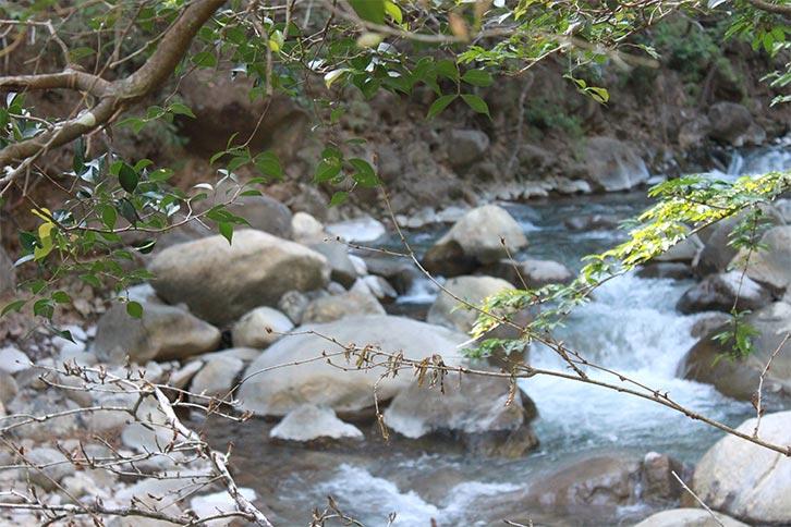 rincon vieja national park creek nature
