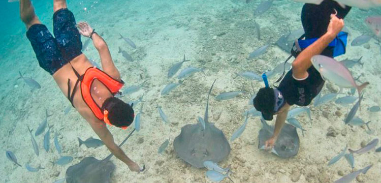 How Safe Is Cozumel Mexico Singray Snorkel Park