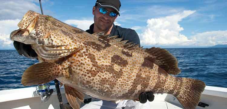 Jamaica Deep Sea Fishing Grouper