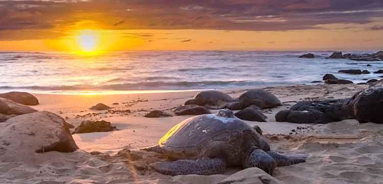 oahu road trip hawaii laniakea turtle beach