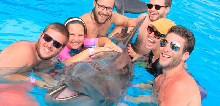 puerto vallarta family activities dolphin swim
