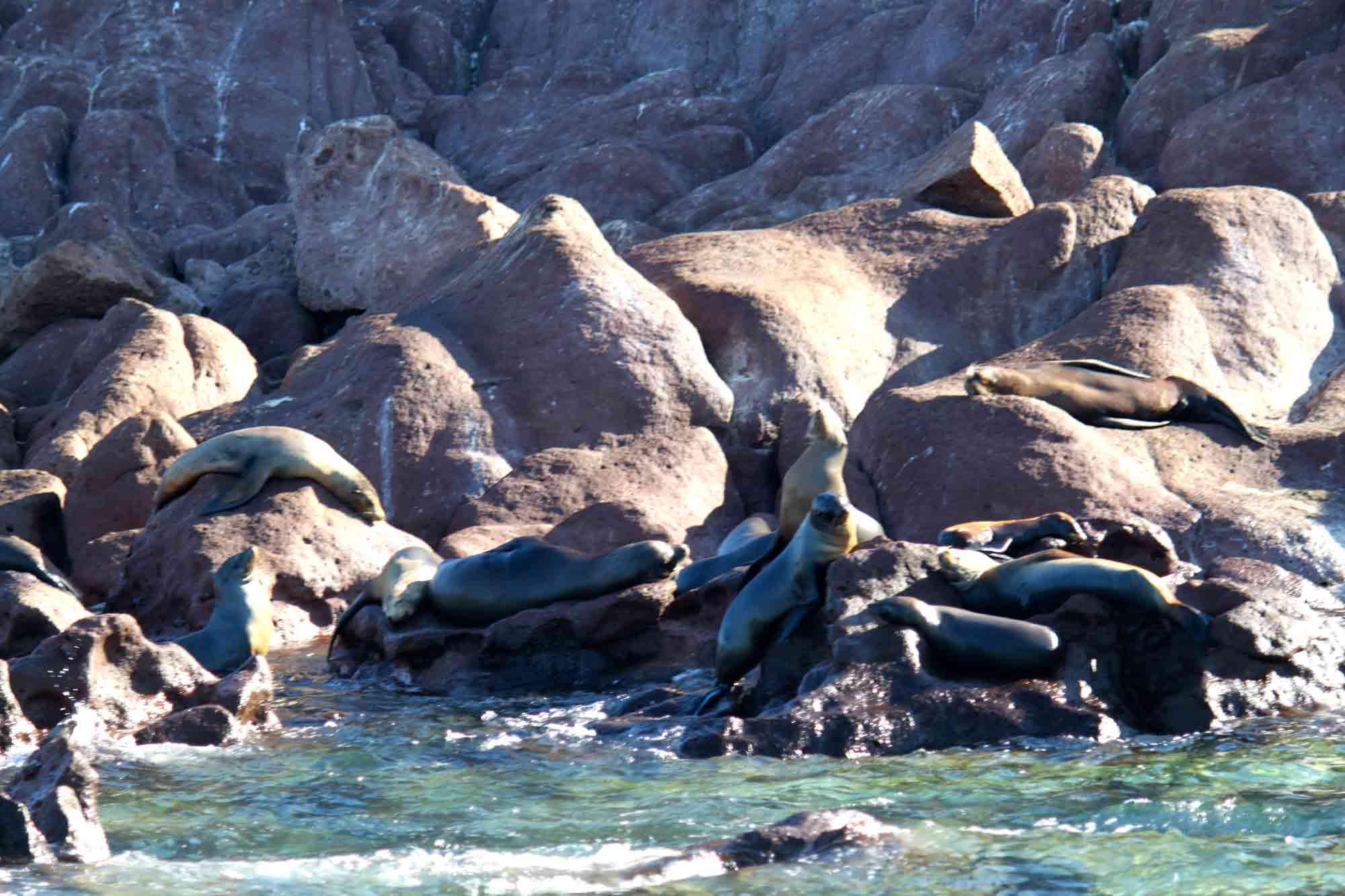 Cabo for singles snorkeling sea lions Espiritu Santo