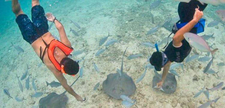 cozumel snorkel diving