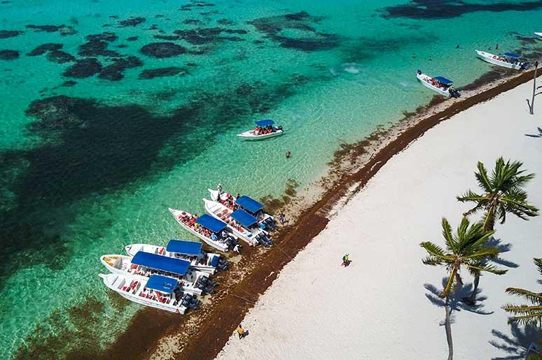 seaweed in punta cana boats