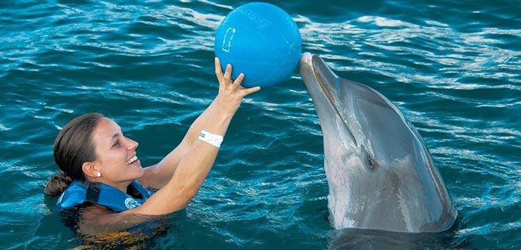 dolphin discovery swim adventure punta cana