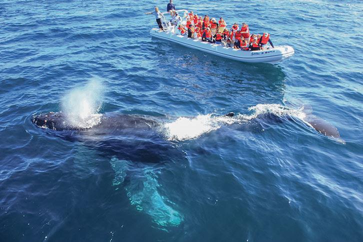 cabo san lucas whale watching raft tour