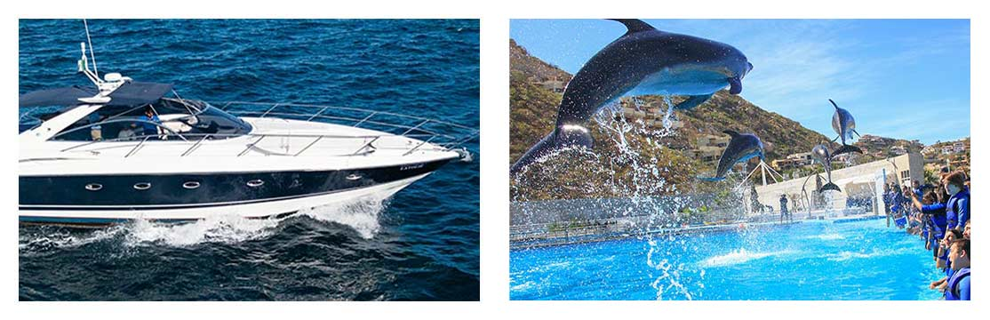 Cabo Dolphin SS & Yacht Signature Experience